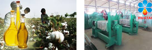 Cottonseed Oil Production Plant